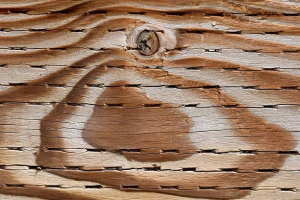 Adobe Stock Treated Wood Reduced